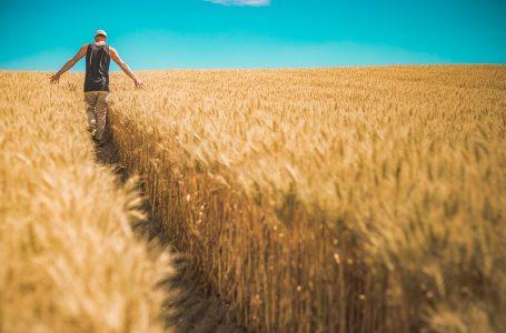 Ogłoszenie pomoc dla rolników