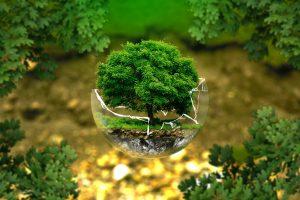 grafika wyróżniająca drzewo w szkle