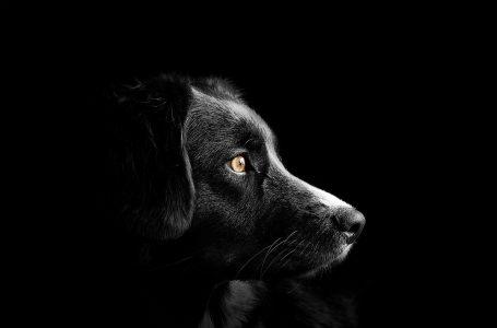 Szukamy domu dla psa