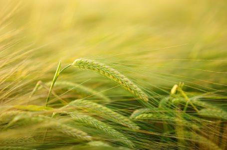 Giełdowy Rynek Rolny: magazyny zwolnione z opłat